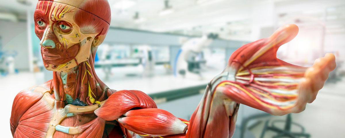 Lab. de Anatomía Humana | UNIDA